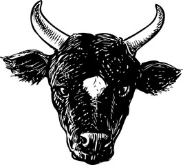 Vector drawing of the head of a black bull