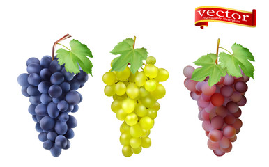 Red, Pink Muscatel and white table grapes, wine grapes. Fototapete