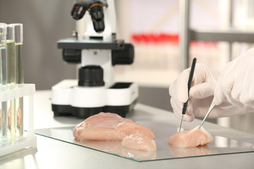 Scientist inspecting meat sample in laboratory, closeup. Food quality control