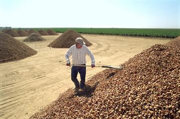 Almond Farmers Fotoväggar