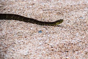Un serpente nel parco nazionale Podocarpus, Ecuador