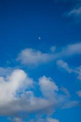 Half Moon in the Daytime Sky