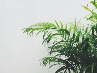 Tropical plant against white wall