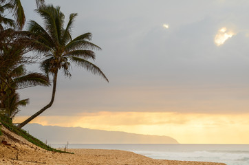 Sun setting over the crooked palm tree, beach and waves on Sunset Beach on the north shore of Oahu, Hawaii, USA