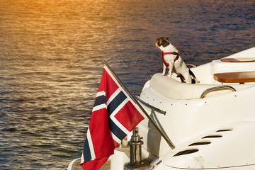 A dog standing on the back of a yacht looking away.