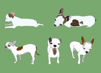 Set of Chihuahua