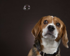 Dog with Soap bubble