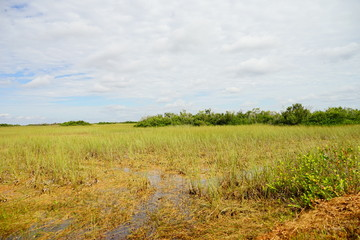 everglades national park landscape