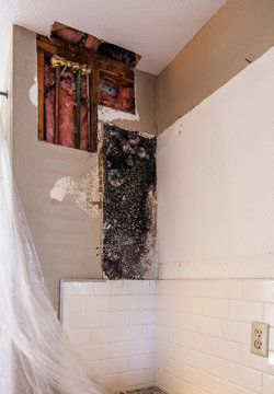 Water Leak Home Repair with Black Mold Found Behind Cabinet