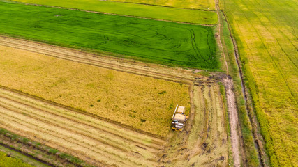 Aerial view of combine harvester in the rice field