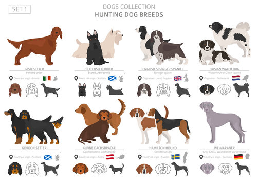 Hunting dogs collection isolated on white. Flat style. Different color and country of origin.