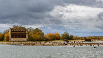 Laguna con ánsares comunes, otros patos y observatorio de aves. Reserva Natural de Lagunas de Villafáfila, Zamora, España.