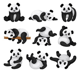 Flat vector set of adorable panda in different poses. Funny bamboo bear. Exotic animal