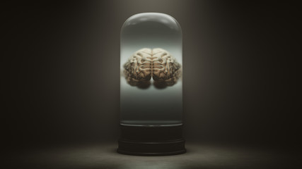 Human Brain Floating in a Liquid in a Bell Jar with a Dark Foggy Background 3d illustration 3d render