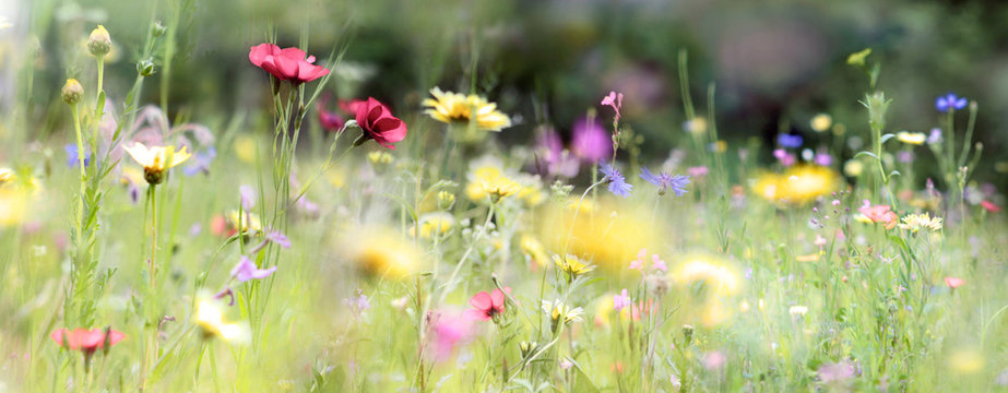 wildblumenwiese natur banner pastell
