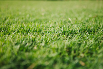 Close-up green grass field