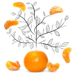 Fruit composition with fresh mandarin and cartoon cute doodle drawing elements on isolated white background. Creative minimalistic food concept.