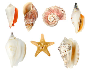 Collection of seashells on white background with clipping path