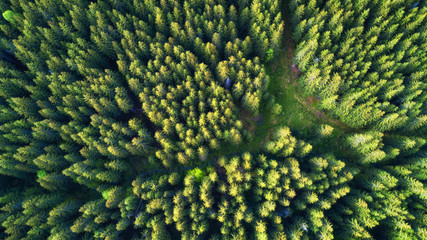 Aerial view on the summer forest. Beautiful natural landscape from air. Green forest as a background from drone.