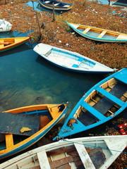 Barcos aurora