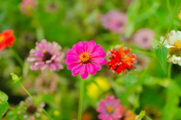 Flowers in the garden in the summer.
