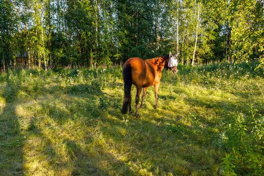 Horse wearing fly mask in field in Syssleback, Sweden