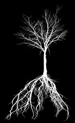 white bare medium tree with root silhouette