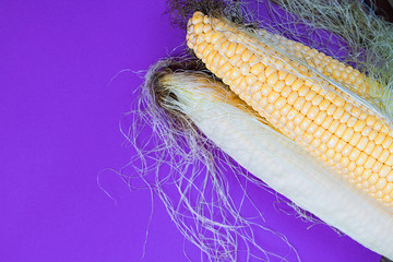corn, sweet, yellow, harvest, food, fresh, agriculture, cereal, organic, colour, contrast, ultra violert,