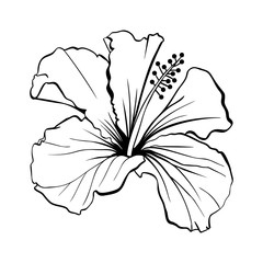 Hawaiian Hibiscus Laser Cut Vector. Fragrance Outline Flower. Mallow Chenese Rose. Black and White Flora. Isolated Botany Plant with Petals. Tropical Karkade or Bissap Herbal Tea, Crimson Blossom