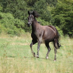 Fototapete - Running pony on pasturage