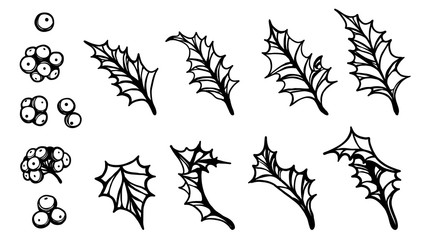 Set of holly leaf silhouette on white background.Black lline vector by hand drawing