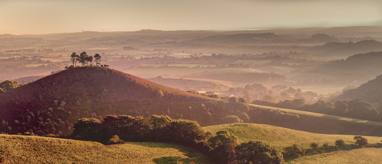 Panorama of isolated Pine tree Copse at Colmers Hill, Dorset covered in early morning light
