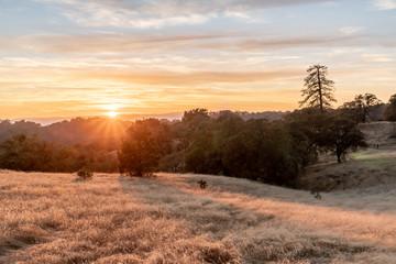 Foto op Plexiglas Zalm The grass turns bright yellow at sunset, Henry Coe State Park, California