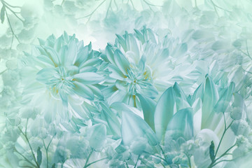 Floral white-turquoise background. Dahlias flowers close-up on a white background. Petals of flowers. Greeting card. Nature..