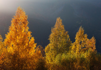Fantastic sunny day in the mountains - view of autumn forest and in the Carpathians