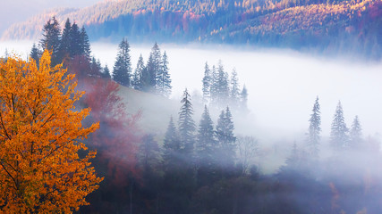 Fog breaking through the clouds to the meadow of beautiful forest in mountains