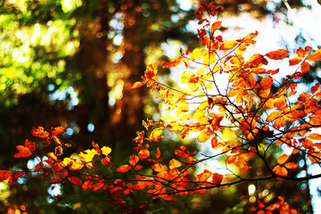 Autumn macro composition with multicolored foliage