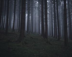 Nebeliger Wald