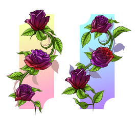 Graphic detailed cartoon violet and red roses flower with stem and leaves. On white background. Vector icon set. Vol. 1