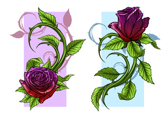 Graphic detailed cartoon violet and red roses flower with stem and leaves. On white background. Vector icon set. Vol. 3