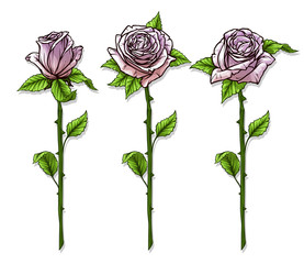 Graphic detailed cartoon pink roses flower with stem and leaves. Isolated on white background. Vector icon set.