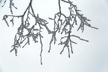branches of tree