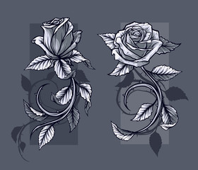 Graphic detailed graphic black and white roses flower with stem and leaves. On gray background. Vector icon set. Vol. 1