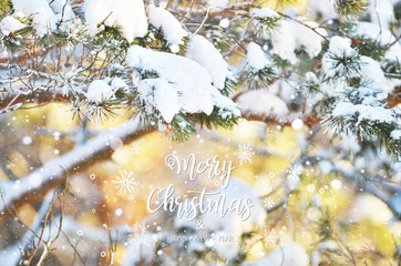 Merry Christmas and Happy New Year. Winter background fresh fir tree branches covered with snow.