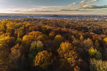Blick über den herbstlichen Mischwald nach Stuttgart