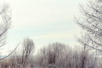 scenic winter landscape background trees with snow