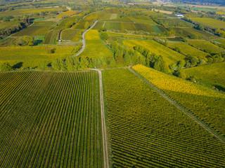 Weinberge Reben von Oben Drohne
