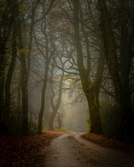 Foggy Country lane near Blackbury Hill Fort, Devon with autumn colours