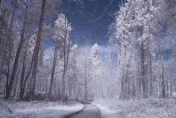 forest in infrared -nopoeple