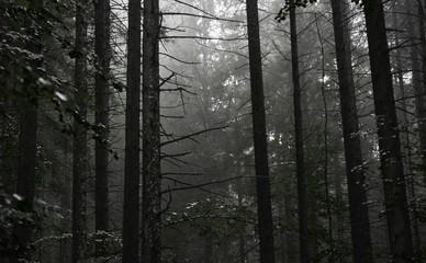 Dark forest in Bayern